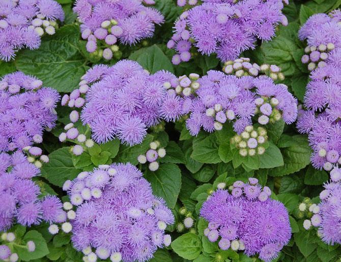 цветников, посадка клумбы