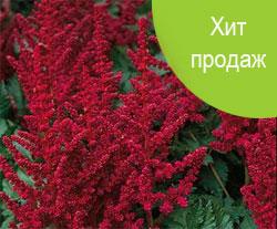 Где купить многолетние цветы москве купить розы в омске по 20 рублей