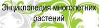 энциклопедия цветов
