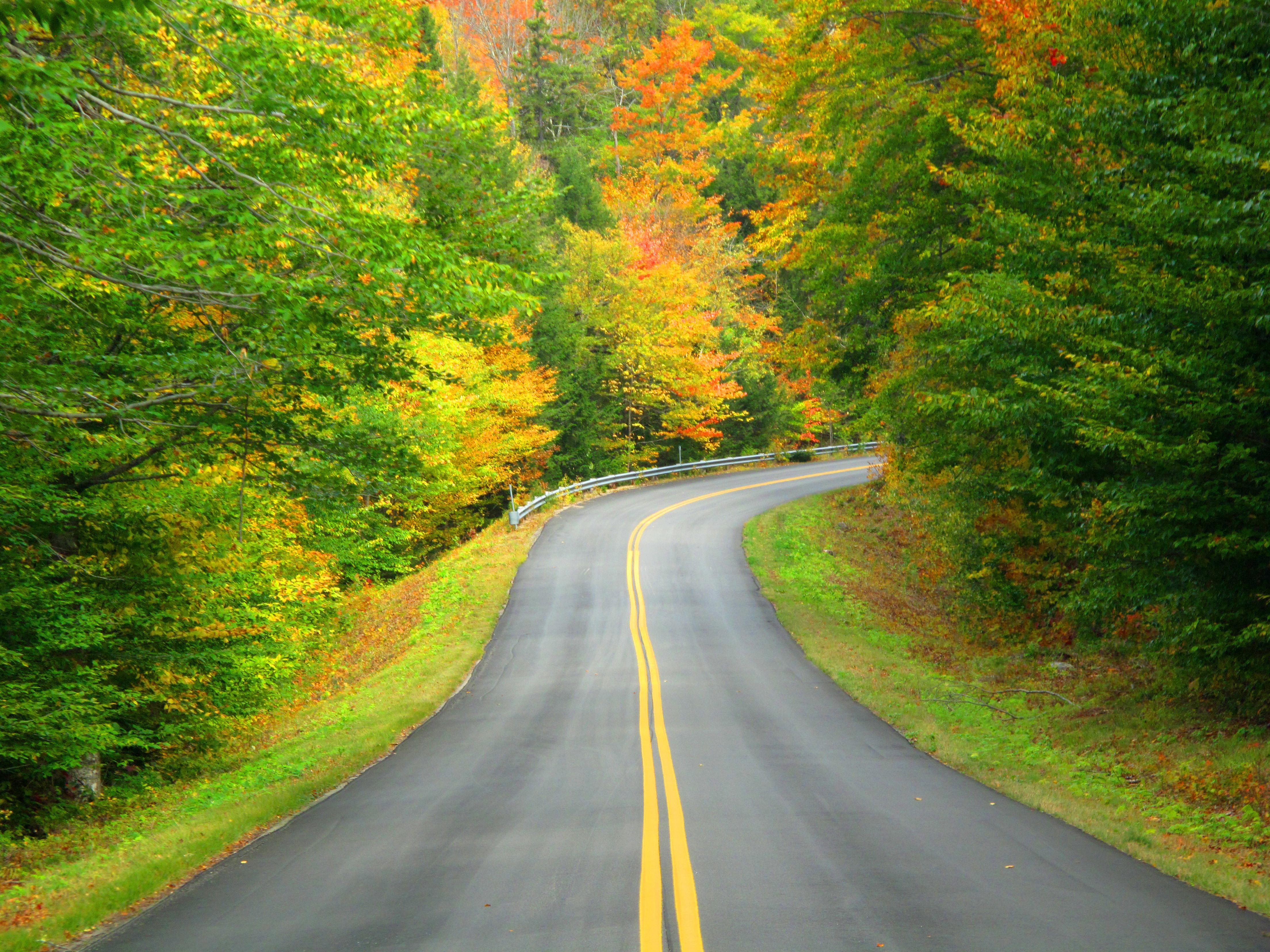 Обои для рабочего стола осенняя дорога, обои дорога осенью ...